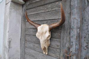 Dekorační Skelet I. Zakázková výroba