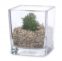 Okrasná rostlina ve skle